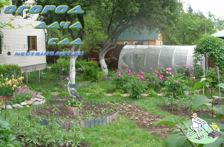 Наша дача сад и огород